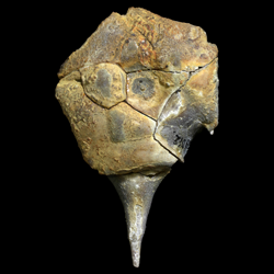 Hydreionocrinidae