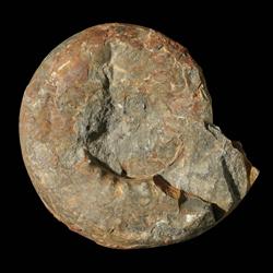 Gastrioceratidae