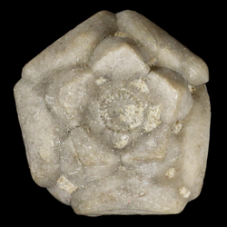 Stellarocrinidae